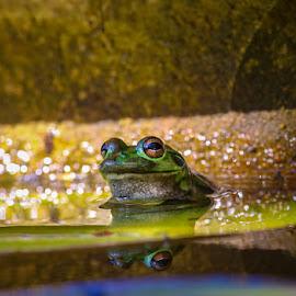 by Hoomanz Xandi - Animals Amphibians