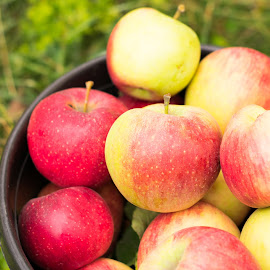 Fresh apples by Andrei B. - Food & Drink Fruits & Vegetables ( fruits, healthy, farming, farm, autumn, apples )