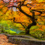 The Path by Ken Smith - Landscapes Travel ( oregon, tree, japanese gardens )