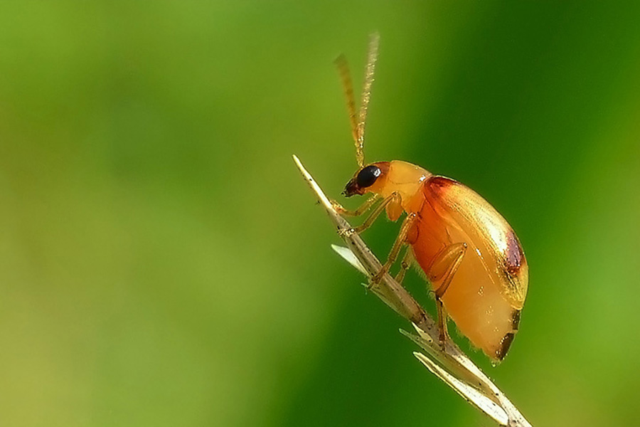 by Tom'z Stone - Animals Insects & Spiders