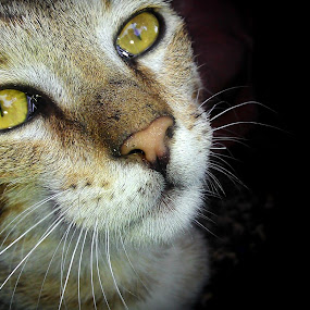 my pet :) by Jyubil Chaudhari - Animals - Cats Portraits ( mobile photos )
