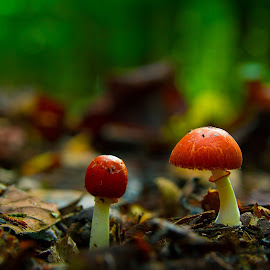 the beauty of the forest. by Barak Johnson - Nature Up Close Mushrooms & Fungi