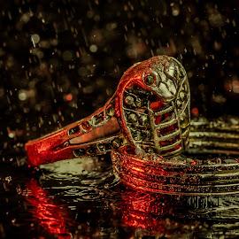 The Two Rings by Bogdan Rusu - Artistic Objects Jewelry ( ring, reflection, rain, black, cobra )