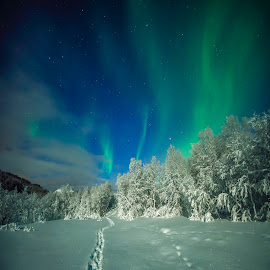 Night by Jens Andre Mehammer Birkeland - Instagram & Mobile Other ( instagram, winter, snow, aurora borealis, moonlight )