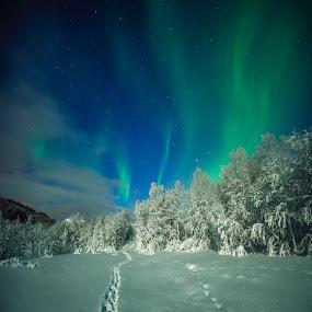 Night by Jens Andre Mehammer Birkeland - Instagram & Mobile Other ( instagram, winter, snow, aurora borealis, moonlight,  )