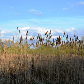 Private Wetlands by Beth Bowman - Landscapes Prairies, Meadows & Fields