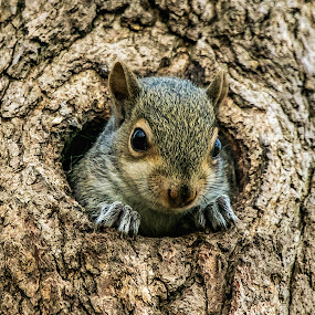 Is That You Mommy? by Kimberly Sharp - Animals Other ( squirrel, wildlife photo, baby squirrel, baby, animal, nature and wildlife, not captive, wild animal, cute, wildlife, adorable,  )
