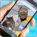 Free Mouse Screen Terrible Joke APK for Windows 8