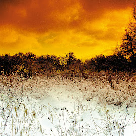 under the snow by Petr Germanič - Landscapes Prairies, Meadows & Fields ( winter, snow, covered with snow )