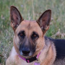 Mabel... by Dawna Hall-Kraus - Animals - Dogs Portraits