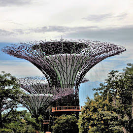 Super groves, Gardens by the Bay Singapore by Suresh K Srivastava - Buildings & Architecture Other Exteriors ( building, steel structure, travel location, architecture, garden, singapore, travel photography )