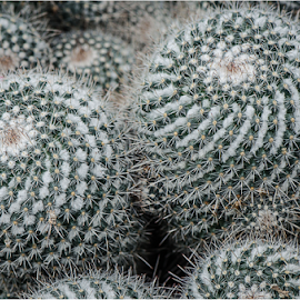 Cactus Patterns 2 by Surendran Narayanamoorthy - Abstract Patterns ( dry condition photos, macro photography, cactus pattern macro, arid plant life macro shot, cactus close up photography,  )