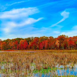 by Kimberly Sharp - Landscapes Prairies, Meadows & Fields ( huntly meadows, november, nature, fall colors, lanscape, virginia, alexandria )