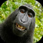 App Animalitos Divertidos APK for Windows Phone