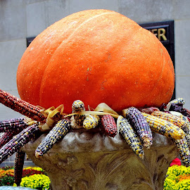 by Andrew Piekut - Public Holidays Halloween