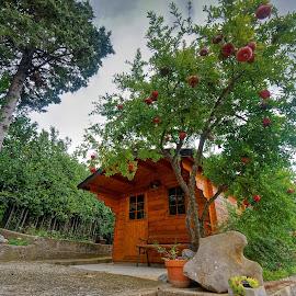 Kućica by Dalibor Jud - Buildings & Architecture Homes ( drvena, cabin, pomegranate, crikvenica, wood, nar, croatia, wood cabin, hrvatska, kućica )