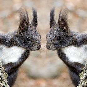 Duo d'ecureuils.jpg
