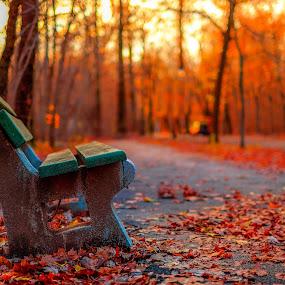 forever autumn by Cornelius D - City,  Street & Park  City Parks