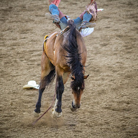 Knees Up by Tyson Page - Sports & Fitness Rodeo/Bull Riding ( spanish fork, saddle, utah, horse, rodeo, bronco )