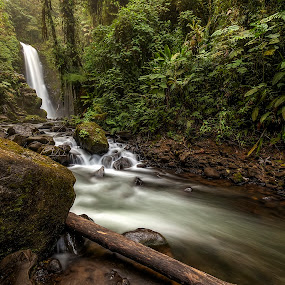 La Pas Waterfall by Dbart ... - Landscapes Forests ( water, la paz waterfall, nature, costa rica, rain forest, stones, landscape,  )