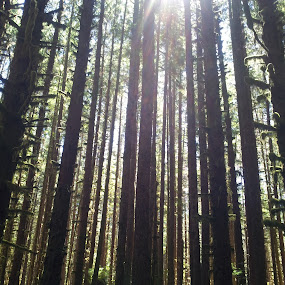 tall trees by Kaitlyn Smith - Nature Up Close Trees & Bushes ( washington, trees, olympic national park, hoh rainforest, tall trees )