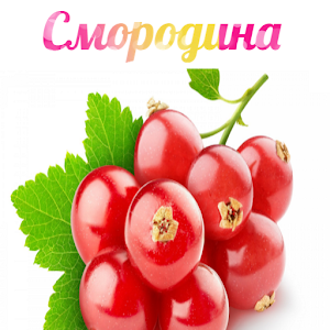 Download Смородина For PC Windows and Mac