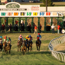 Out The Gate by Tina Hailey - Animals Horses ( horses, tinas captured moments, racing, race )