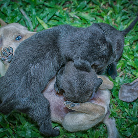 by SweeMing YOUNG - Animals - Dogs Playing