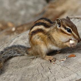 by Ros Dando - Animals Other Mammals