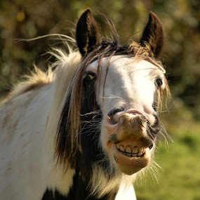 Smile by H. B. - Animals Horses ( animals, horses, horse, smile, portrait )