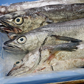 Fish by Eva Pastor - Food & Drink Ingredients ( fresh, fish )