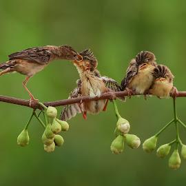 Mother's cared by Bernard Tjandra - Animals Birds