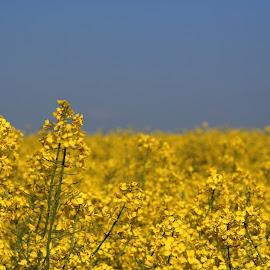 by Rhian Sampson - Landscapes Prairies, Meadows & Fields (  )