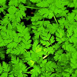 Green field by Andrea Riccobene - Nature Up Close Gardens & Produce (  )