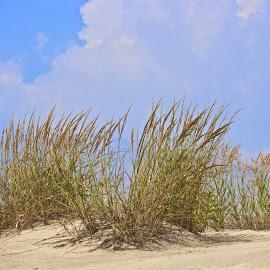 Sea grass  by Petrina Grimes - Landscapes Beaches ( clouds, sand, blue sky, grass, summer )