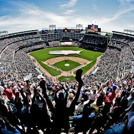 Play Ball by Tanner Christman - Sports & Fitness Baseball ( baseball, fans, stadium, sports, celebration, win, game, crowd,  )
