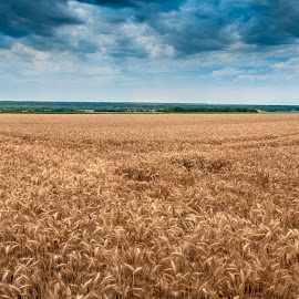 In the field by Sinisa Mrakovcic - Landscapes Prairies, Meadows & Fields (  )
