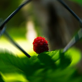 A Spin on  Berry by Marcus Dorsey - Food & Drink Fruits & Vegetables ( natural light, new, life, editorial, nature, berries )