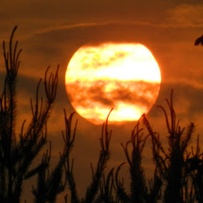 DRI Sunset by Thomas Fitzrandolph - Landscapes Sunsets & Sunrises ( orange, nikon l120, sunsets, niagara county ny, trees, summer, lockport ny, sun,  )