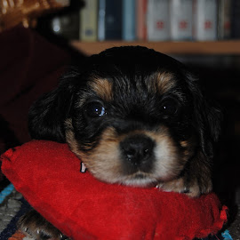 My name is Maza by Maja Tomic - Animals - Dogs Puppies ( puppy, dog )