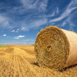 Summertime by Olivier Damanet - Landscapes Prairies, Meadows & Fields ( summer )