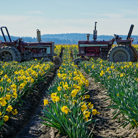Tractors  by Todd Reynolds - Transportation Other