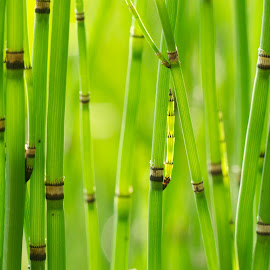Stems by Milind Lele - Nature Up Close Other plants ( wild, nature, aquatic, green, beautiful, plants )
