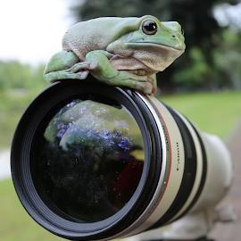 by DODY KUSUMA  - Animals Amphibians