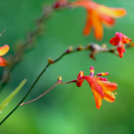 by Eugene O'Connor - Nature Up Close Other plants (  )