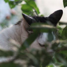 Hiding by Bosko Bunusevac - Animals - Cats Portraits ( cat face, cat, nature, cat portrait, nature up close, nature photography )