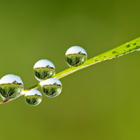 Five Musketeers by Setiady Wijaya - Abstract Water Drops & Splashes