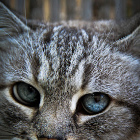 by Eliran Daniel - Animals - Cats Portraits