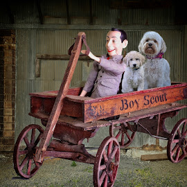 The wagon ride by Sandy Scott - Animals - Dogs Puppies ( pets, domestic animals, goldendoodle, wagon, dogs, pee wee herman, canine, antique, puppies, transportation )