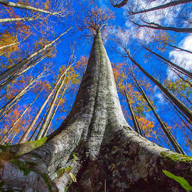 Beech tree by Stanislav Horacek - Nature Up Close Trees & Bushes